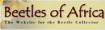 Beetles of Africa :: The website for the Beetle Collector